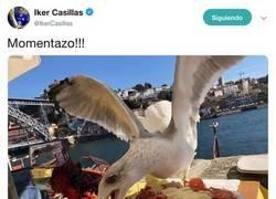 Enlace a Casillas sube una foto de una gaviota robándole la comida y los comentarios que recibe son puro caviar iraní
