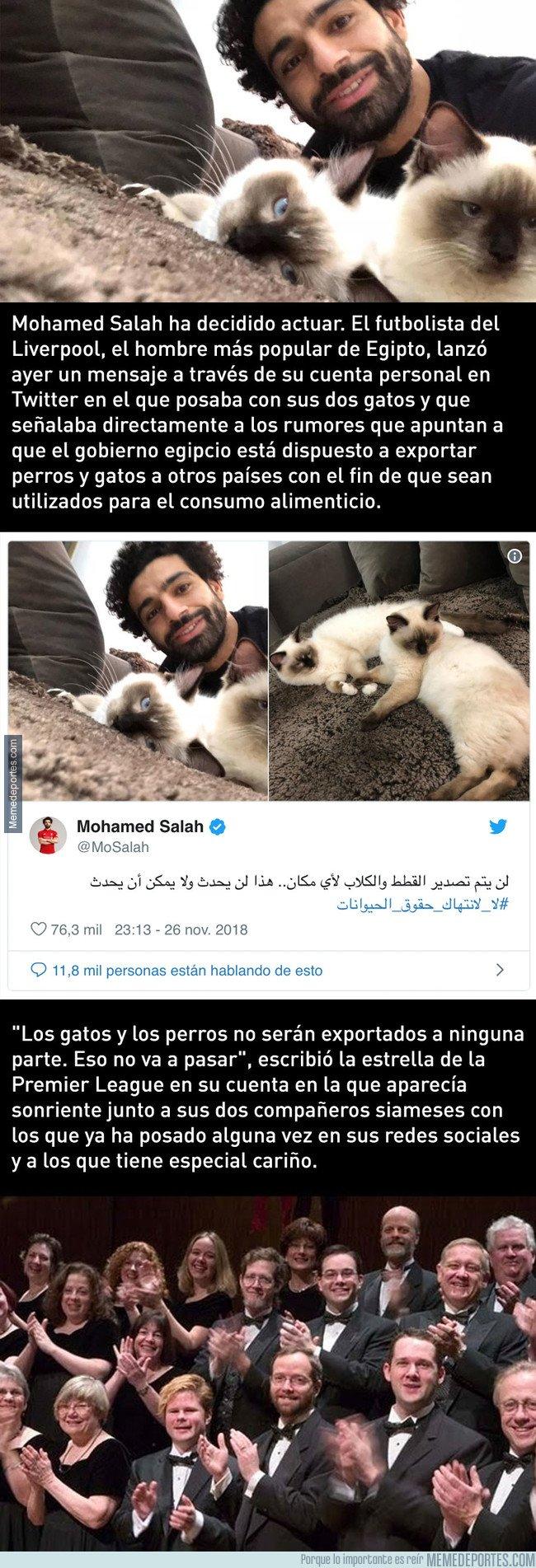 1057501 - Egipto quiere exportar gatos para consumo humano y Salah se gana Internet con su frase