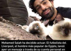 Enlace a Egipto quiere exportar gatos para consumo humano y Salah se gana Internet con su frase