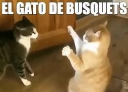 Enlace a El gato de Busquets. Por @alexia