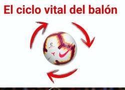 Enlace a El ciclo vital del balón