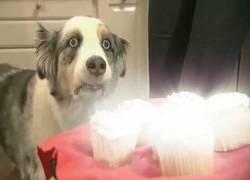 Enlace a El perro-premonición