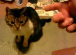 Enlace a Gato asesinado por su dueño frente a la cámara