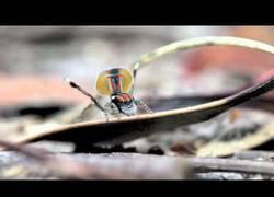 Enlace a ¿Dudabas que una araña podría ser una monada? ( salta al 3:00)