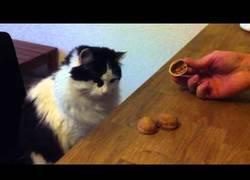 Enlace a El gato que juega a los trileros