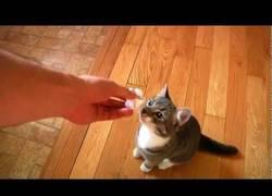Enlace a Otro trastorno de identidad en gatos