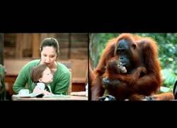 Enlace a Entre el mundo de los humanos y el de los animales hay poca diferencia