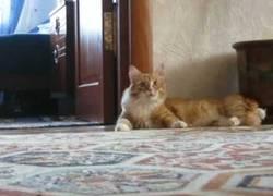 Enlace a Gato Frankestein