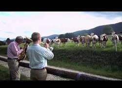 Enlace a Cómo atraer a las vacas