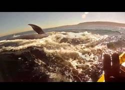 Enlace a Encuentro con una ballena azul en un kayak