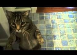 Enlace a El único gato obediente