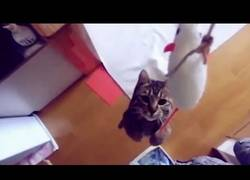 Enlace a Para todos los amantes de ese ser tan peculiar llamado gato