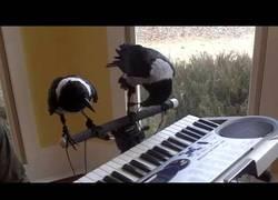 Enlace a Cuando dos cuervos tocan mejor el piano que tú