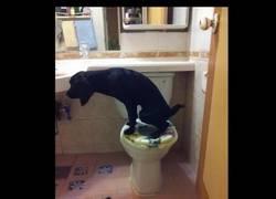 Enlace a El perro más educado del mundo