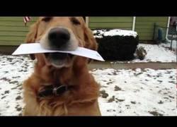 Enlace a Con un perro así, ¿quién necesita un buzón?