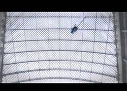 Enlace a Festo, el robot que simula el vuelo de una libélula