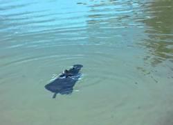 Enlace a Igualmente no tenía ganas de nadar hoy...
