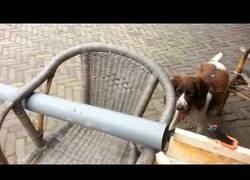 Enlace a Y así mi perro juega solo