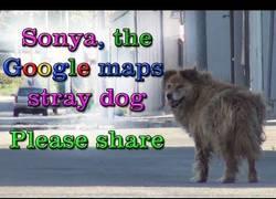 Enlace a Google maps también ayuda a salvar perros callejeros