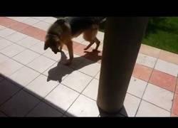 Enlace a A este perro ruso esto de que le sigan no le gusta