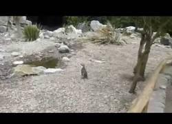 Enlace a En el mundo de los pingüinos, también hay un forever alone