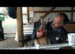 Enlace a Desayunando con mi amigo el canguro