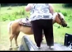 Enlace a Está claro que el caballo no veía la situación nada clara