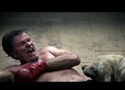 Enlace a Curioso y explícito corto sobre las peleas de perros, a mí me ha puesto la piel de gallina