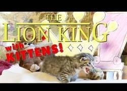 Enlace a El Rey León con gatitos y narrado por un niño pequeño, adorabilidad máxima (inglés)