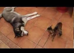 Enlace a ¡Que no quiero jugar, no seas pesado, perro!