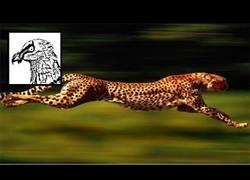 Enlace a Los animales terrestres más rápidos del mundo