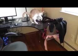 Enlace a ¿Quieres evitar que tu gato suba a tu escritorio, tiéndele esta inofensiva trampa a ver si aprende