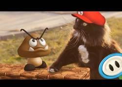 Enlace a Super Mario Cat