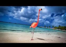 Enlace a ¿A quién no le gustarían unas vacaciones así?¡El paraíso de Aruba, babies!