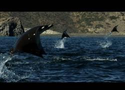 Enlace a Impresionantes imagenes de rayas saltando en el agua ¡Parecen delfines!