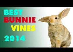 Enlace a Los mejores vines dedicados a conejos