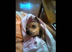 Enlace a ¡Hay perritos que se parecen a bebés!