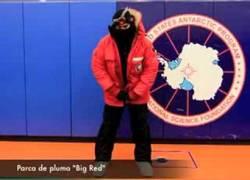 Enlace a ¿Cómo sobreviven a -70ºC en el Polo sur?