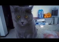 Enlace a Este gato reacciona de una manera peculiar cuándo tocas un tipo de plástico