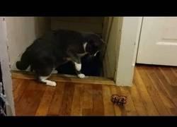 Enlace a A veces los gatos son un un poco dramáticos...