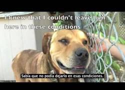 Enlace a Este perro fue rescatado después de 15 años amarrado