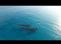 Enlace a Practicando paddleboarding con ballenas