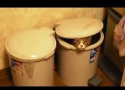 Enlace a Hay gatos dos tipos de gatos, los que les encanta la papelera y los que la odian