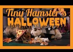 Enlace a Los hamsters también celebran el Halloween y se lo pasan en grande