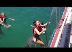 Enlace a Este delfín no quiere que se vaya esta chica y así se lo demuestra