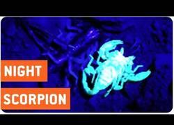 Enlace a Así es la piel de un escorpión ante la luz ultravioleta
