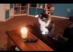 Enlace a Ese misterio de los gatos y las velas... ¿Qué les pasa?