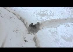 Enlace a Los perros se divierten en la nieve y este también con su particular laberinto