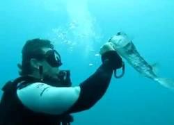 Enlace a Este submarinista rescata a un pez globo de un gancho. ¡Enorme!