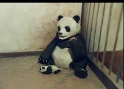 Enlace a ¿Recuerdas este vídeo viral del oso panda y su bebé? Ahora recreado con plastilina